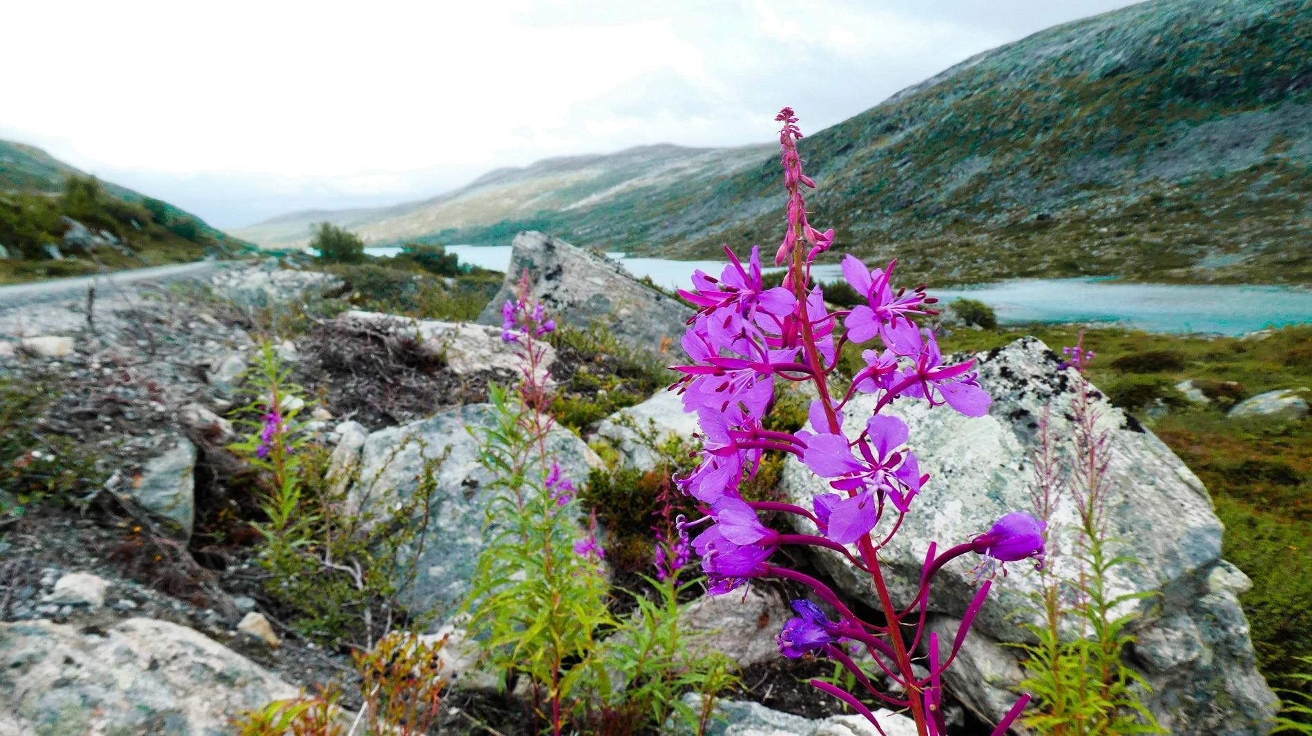 Geirangerfjord Fjord Norwegen UNESCO-Weltnaturerbe