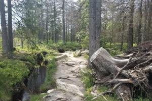 Harz Ausflug mit dem Wohnmobil